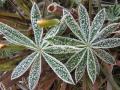 Mraz je pobelil naravo
