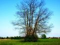 osamelo drevo