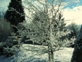 Zimsko cvetenje
